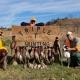 Masons Group Pheasant Hunting at Triple T
